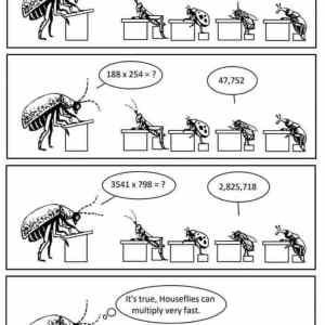 houseflies can multiply fast